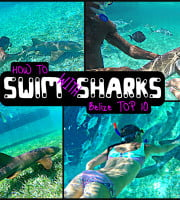 How to swim with sharks Caye Caulker Belize