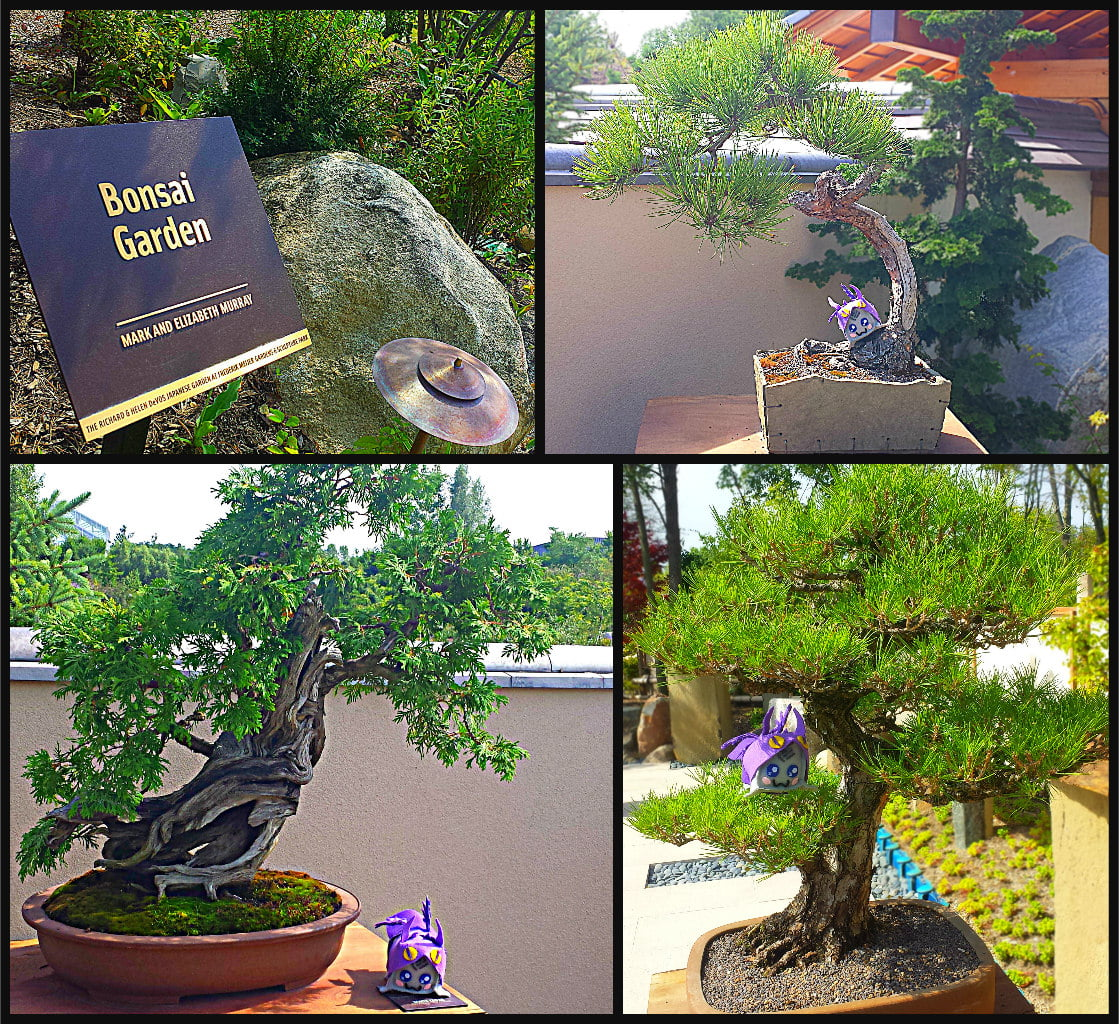Japanese Bonsai Garden Meijer Gardens Adventure Dragon