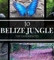 Belize Jungle Feature Pic
