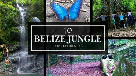 Belize Jungle Top 10