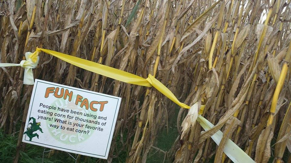 Uncle Shuck's Corn Maze Georgia Corn Maze Fun Fact 1
