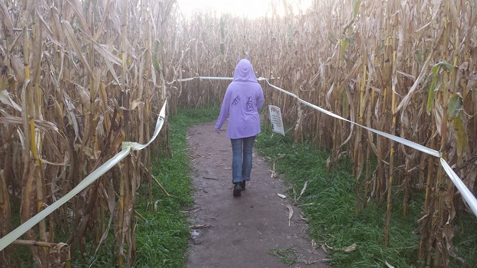 Escape Medusa's Gaze at Uncle Shuck's Corn Maze