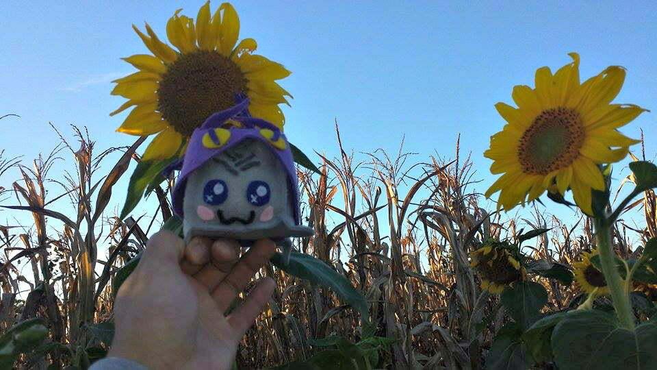 sunflowers at Uncle Shuck's Corn Maze Georgia