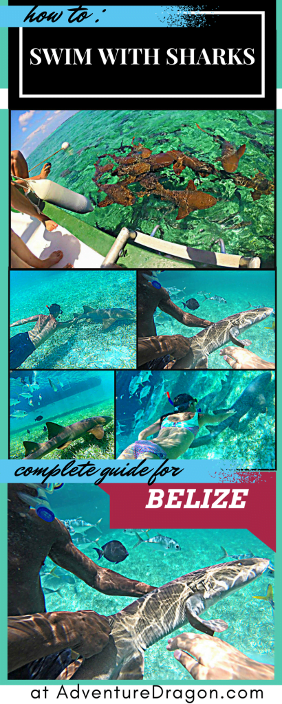 Adventure Dragon how to swim with sharks Caye Caulker Belize