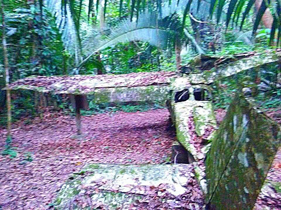 Belize Jungle plane wreck trail hike Cockscomb Basin Wildlife Sanctuary Jaguar Reserve