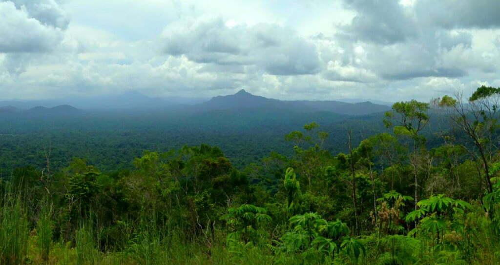 Victoria Peak Belize Jungle Hike Cockscomb Basin Wildlife Sanctuary Jaguar Reserve