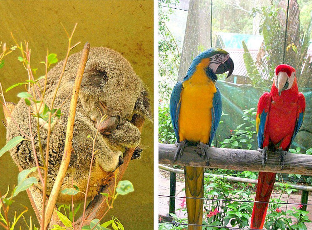 things to do in Kuranda Village in a Rainforest - Birdworld and Koala Gardens