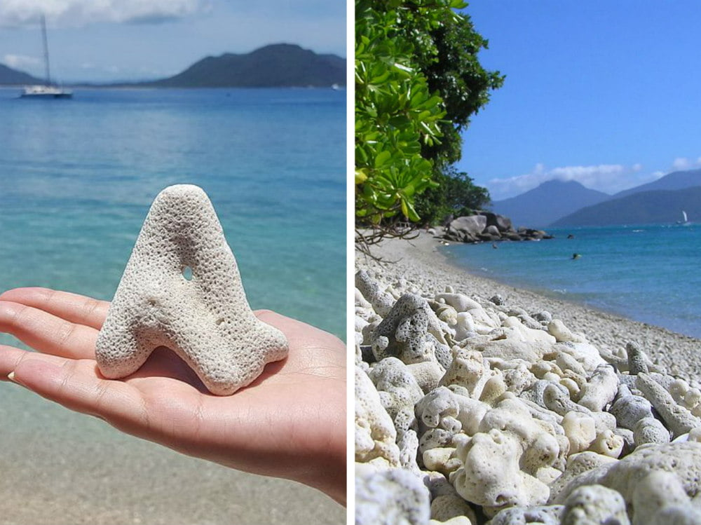 best beaches in Cairns Fitzroy Island dead coral washed ashore
