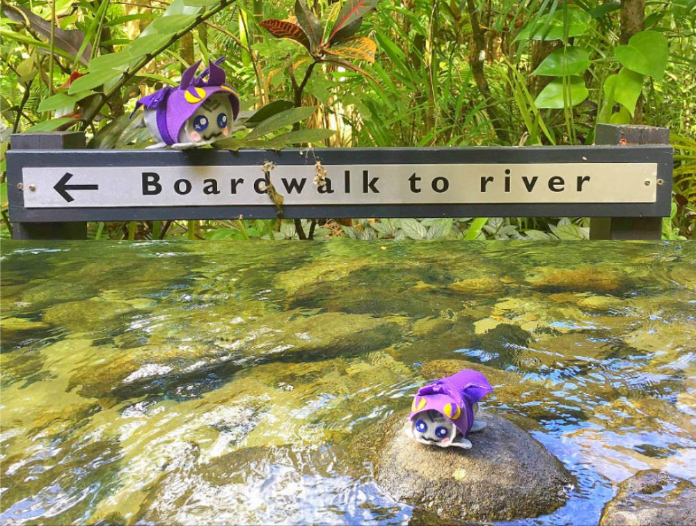 Mossman Gorge Daintree Rainforest Cairns Australia Best Things to Do