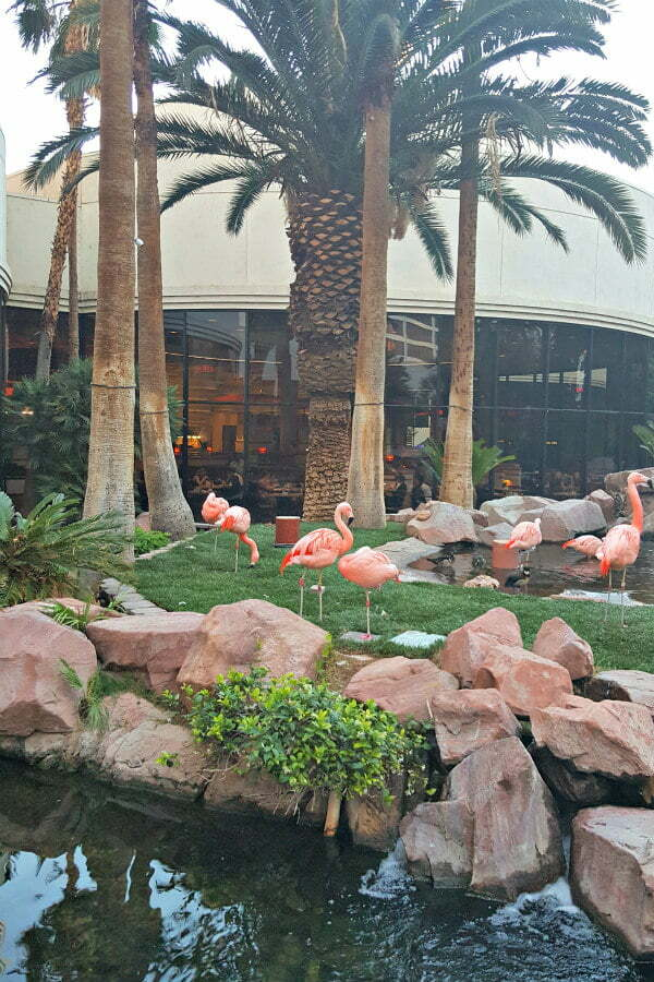 100 Free Things to do in Las Vegas - Free Flamingo Habitat