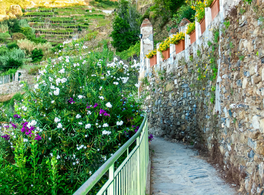 Best Walks in Cinque Terre Vernazza Vineyard Path