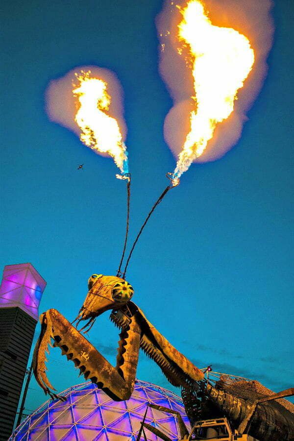 100 Free Things to do in Las Vegas - Praying Mantis Shoots Fire at Downtown Container Park