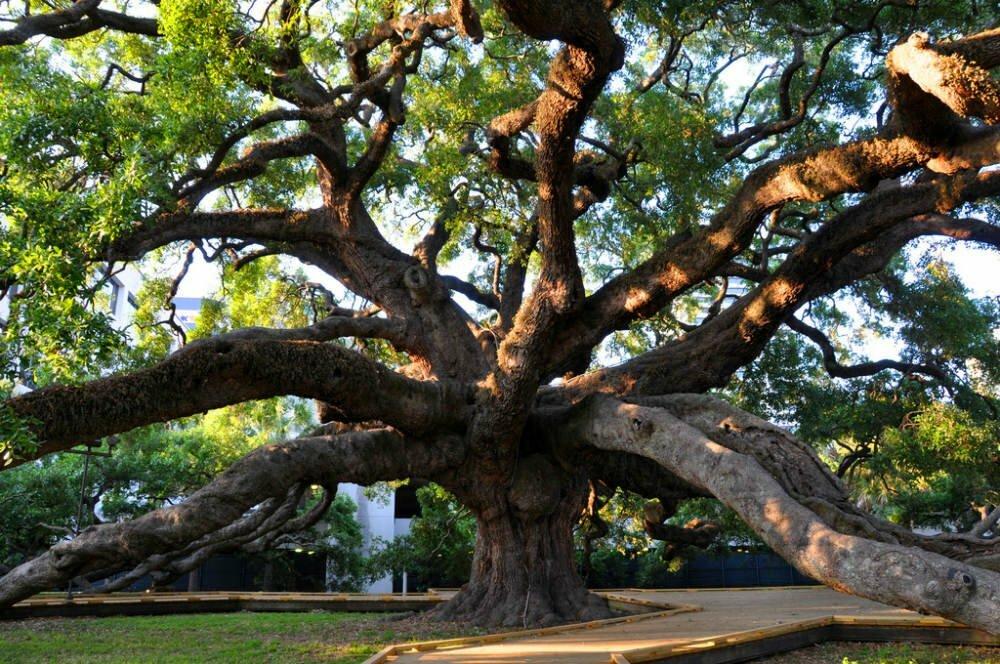 Treaty Oak Jacksonville FL FreeThings To Do