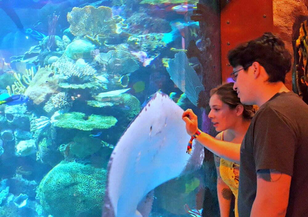 100 Free Things to do in Las Vegas - Stingray Feedings at Silverton Aquarium